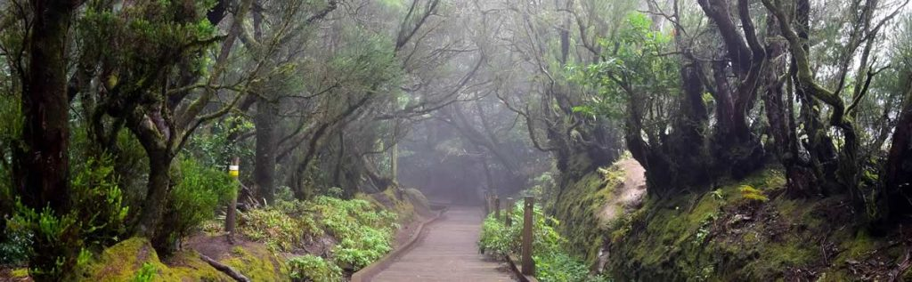 vacation in tenerife anaga forrest