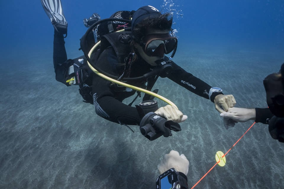 peak performance buoyancy aquarius reef
