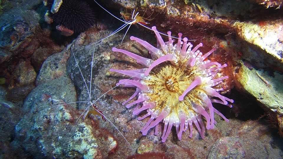 anemone diving tenerife