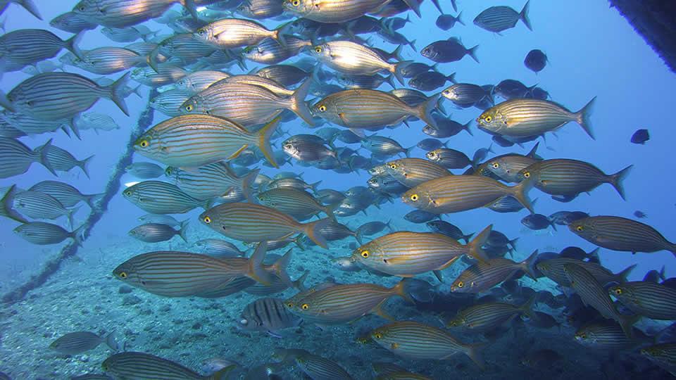 salima diving tenerife