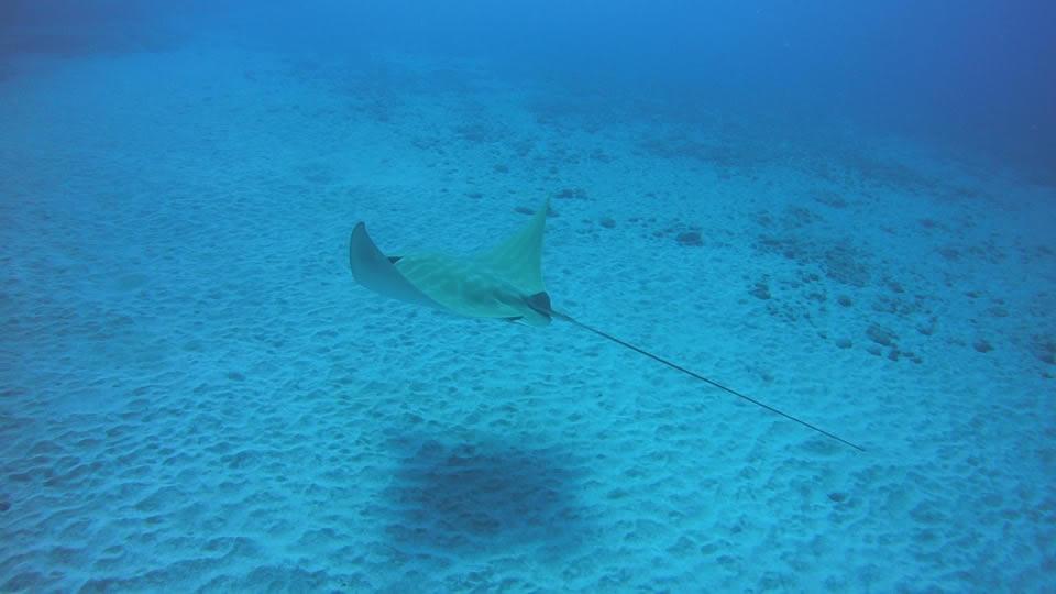 padi underwater naturalist course tenerife