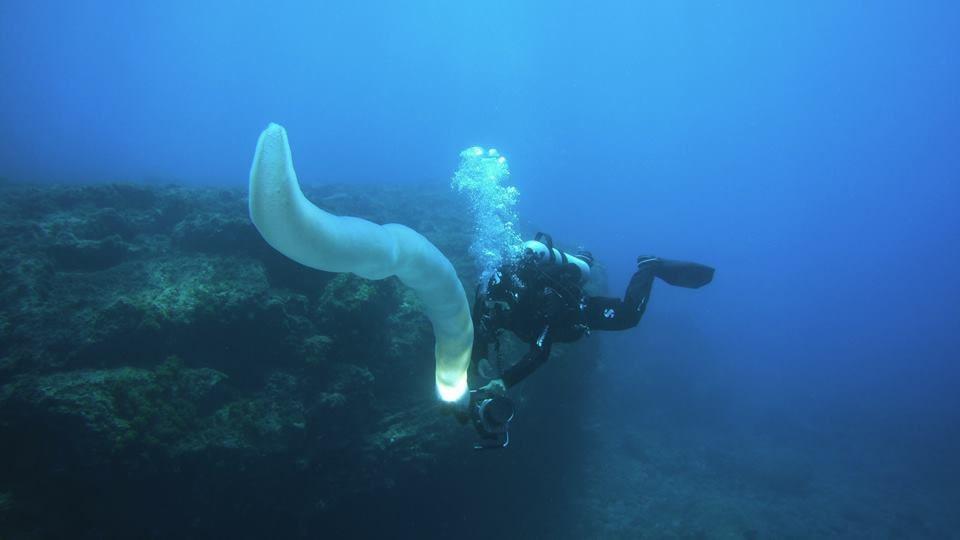 padi underwater naturalist