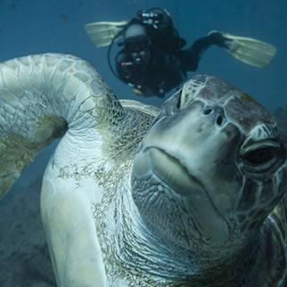 scuba diving tenerife