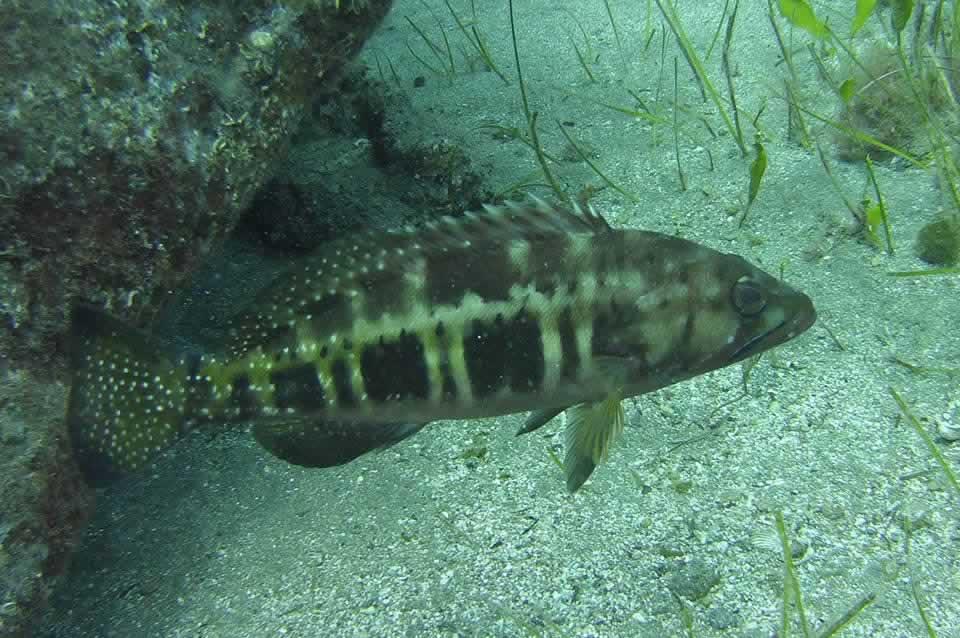 snorkeling in tenerife