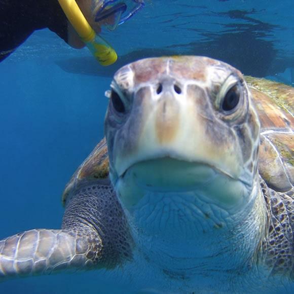 snorkeling tenerife scubapro snorkel equipment
