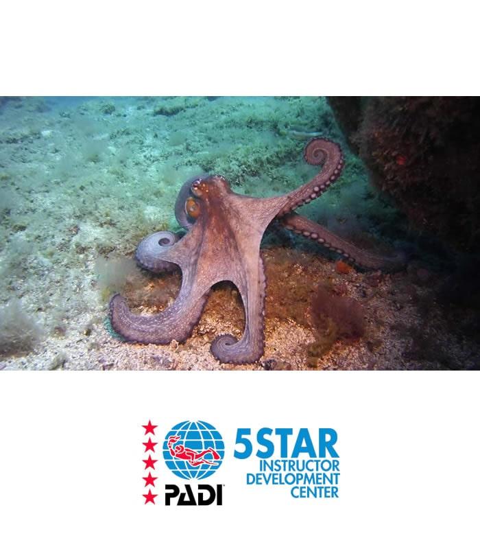 underwater naturalist padi scuba diver course tenerife